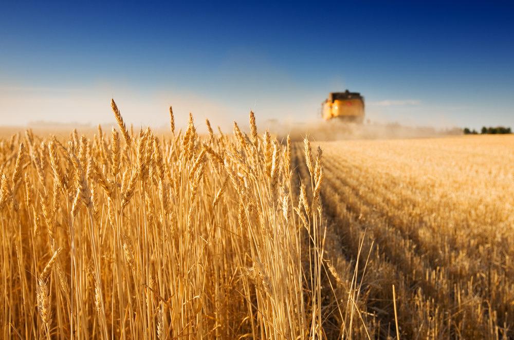 Херсонські аграрії зібрали перший мільйон тонн зернових